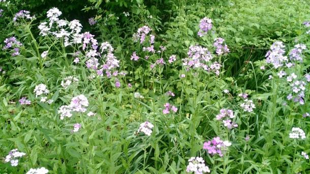 Mels Flowers